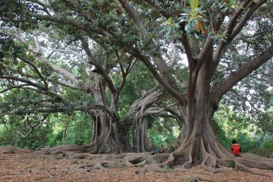 Le bocche fiamminghe. Stazione 4: La sagrada Familia degli alberi. In ascolto del Signore delle lingue e delle radici. Autore: Tiziano Fratus